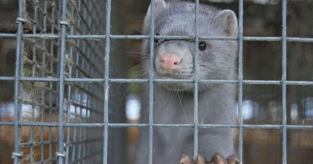 animale in gabbia